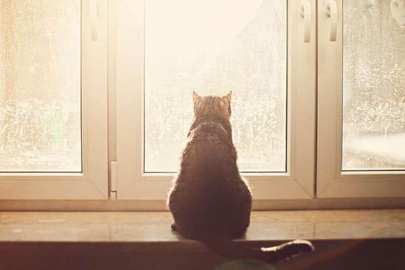 gato-janela-6