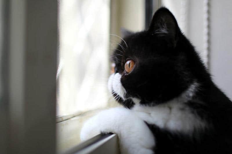 gato-janela-7