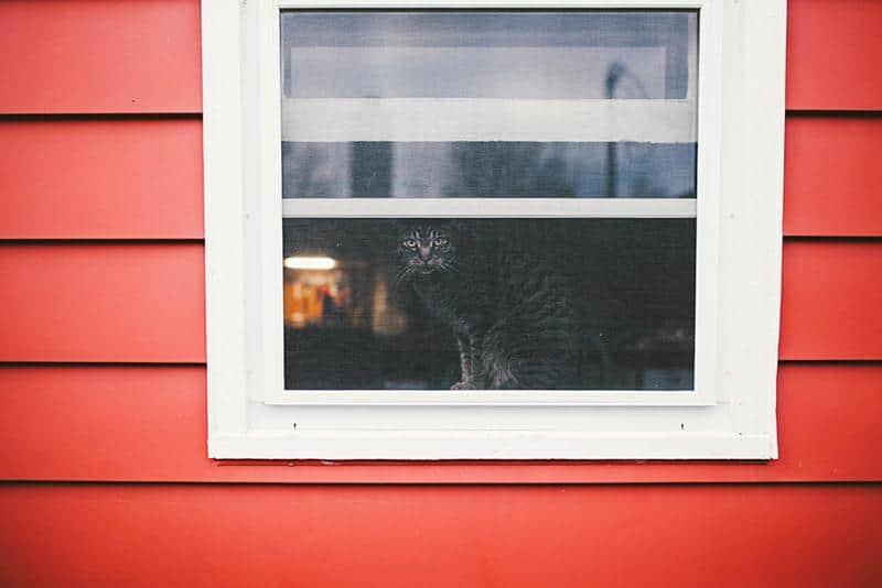 gato-janela-8