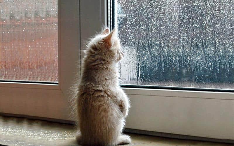 gato-janela-9