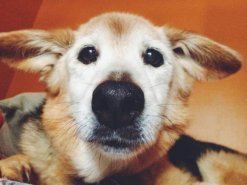 adeus-cachorrinha-12