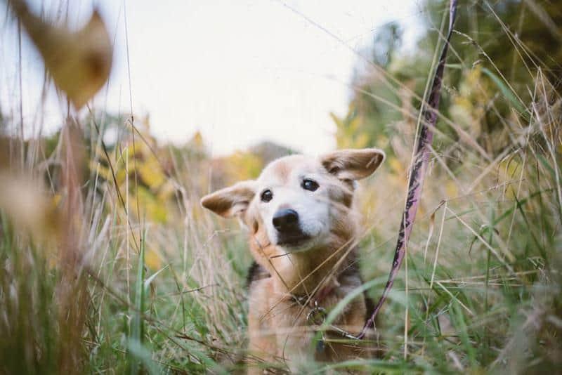 adeus-cachorrinha-16