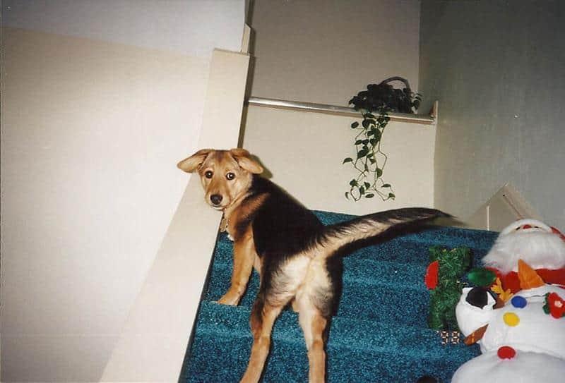 adeus-cachorrinha-4