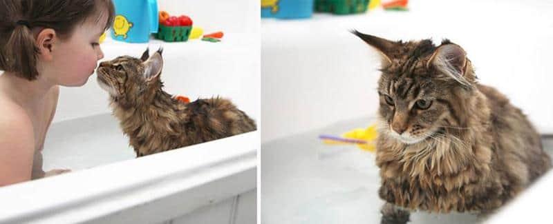 amizade-gato-terapia-11