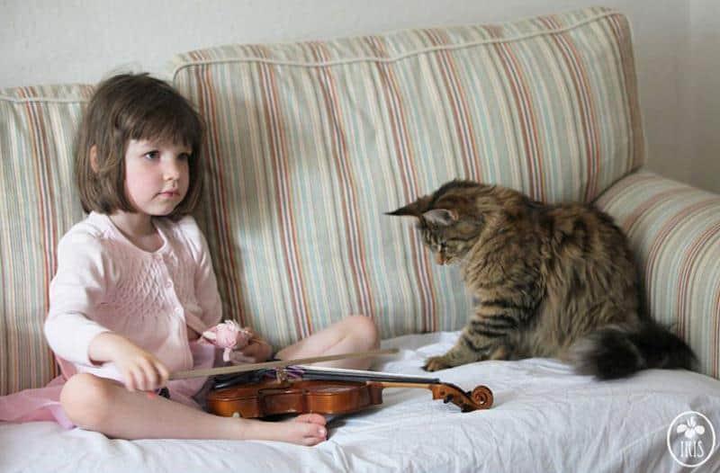amizade-gato-terapia-13
