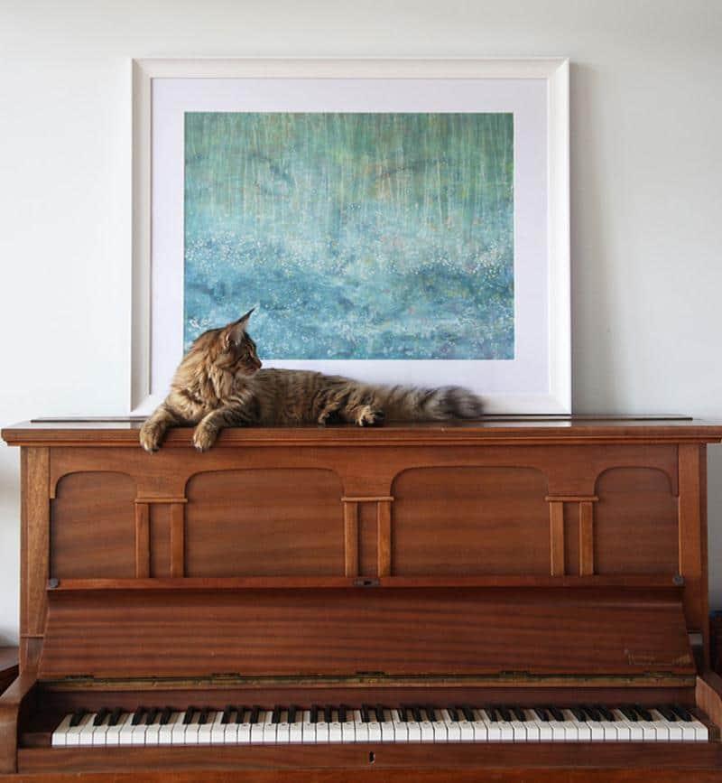 amizade-gato-terapia-23