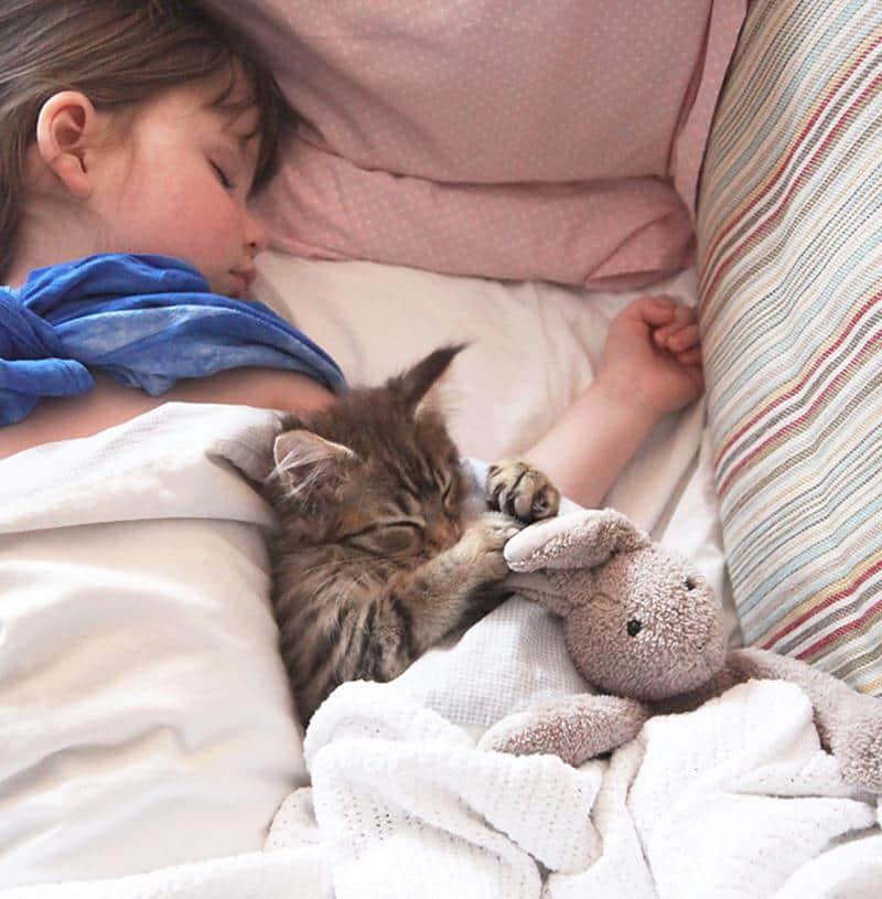 amizade-gato-terapia-3