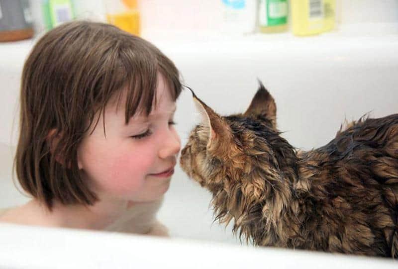 amizade-gato-terapia-4