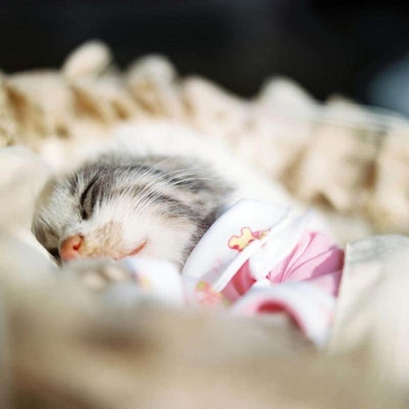 animal-dormindo-1