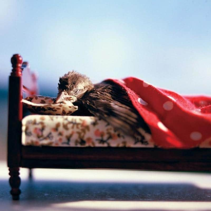 animal-dormindo-4