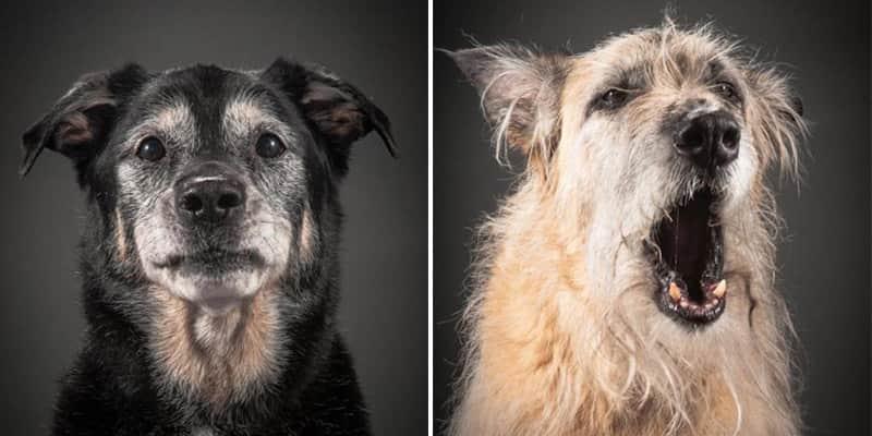 Fotos mostram que mesmo quando velhos cães ainda são fofos 2