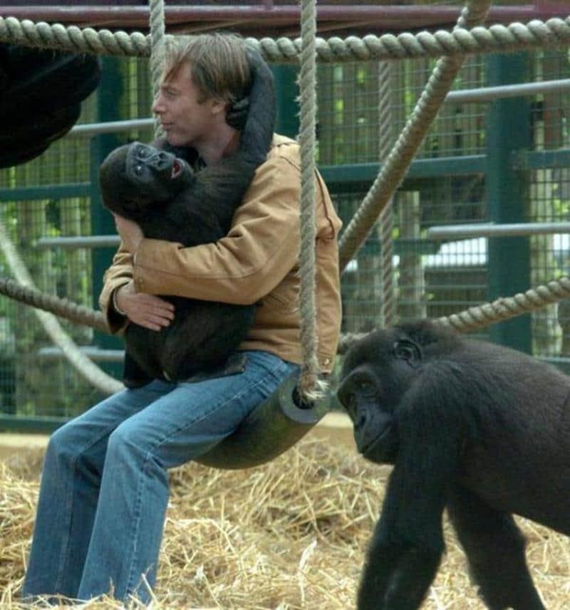 criador-gorilas-1