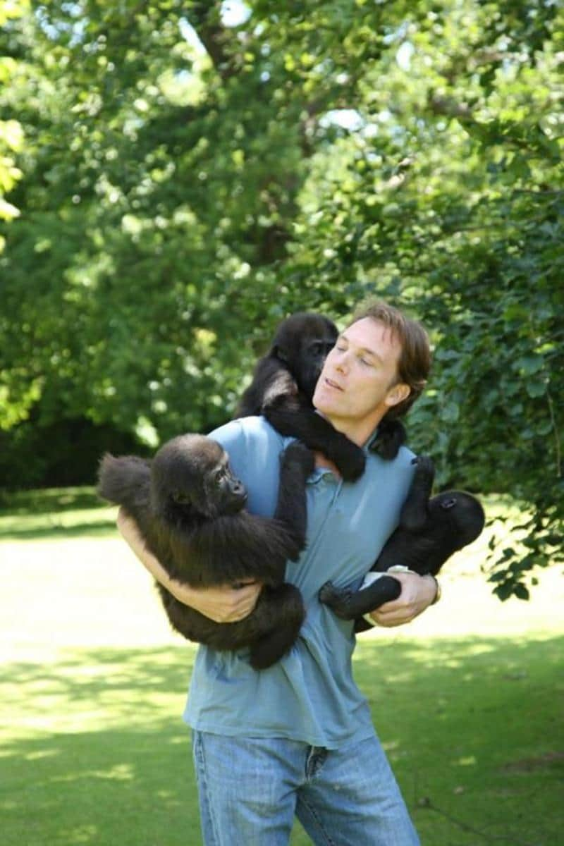 criador-gorilas-2