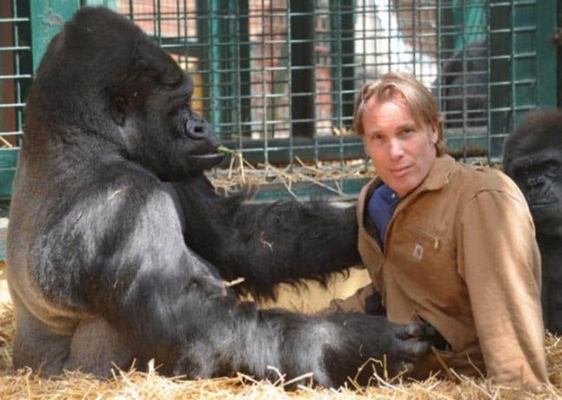 criador-gorilas-3
