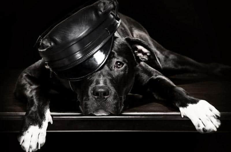 homem-cachorro-3