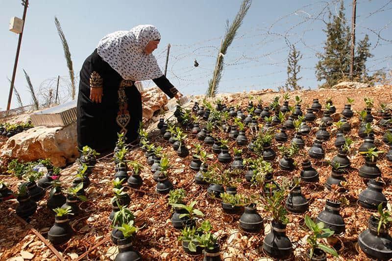 Mulher palestina faz jardim usando granadas da Guerra 1