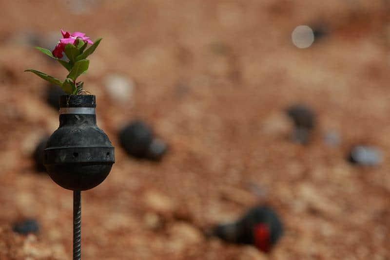 jardim-granadas-10