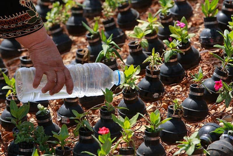 jardim-granadas-9
