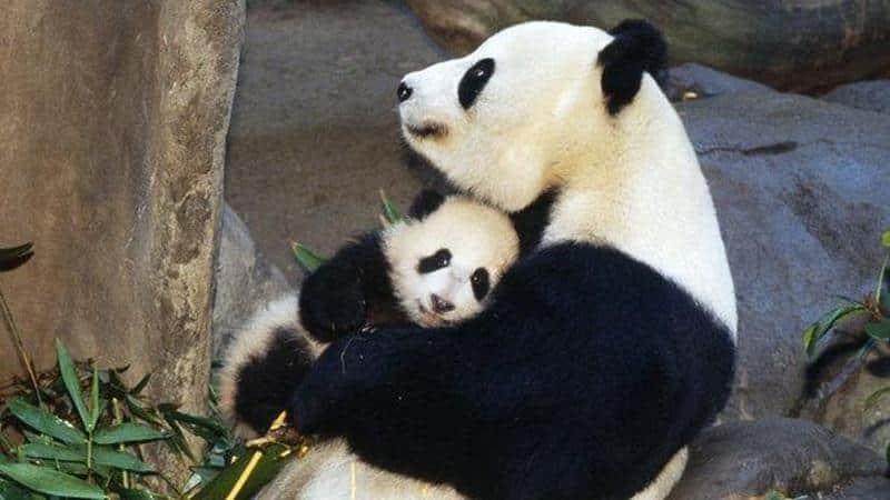 Conheça as mães mais protetoras do mundo animal 2