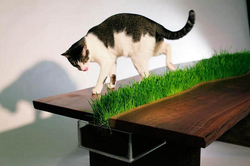 mobilia-gato-21