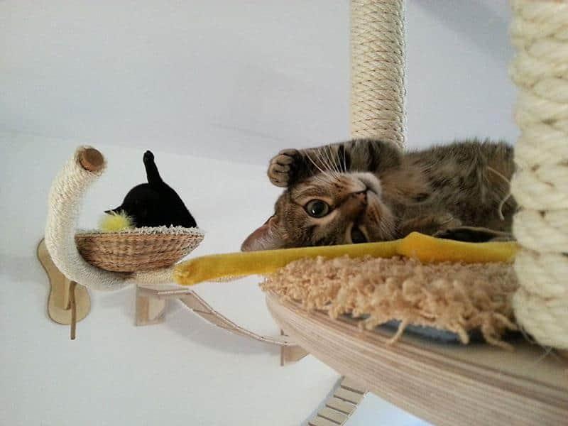 mobilia-gato-31