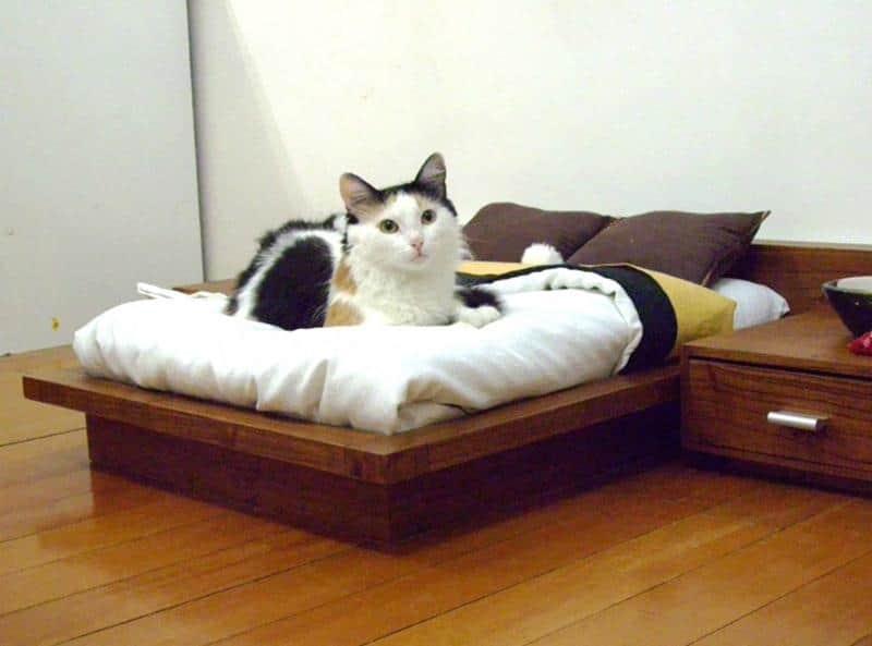 mobilia-gato-4