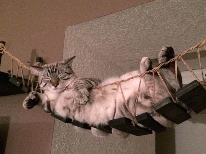 mobilia-gato-6