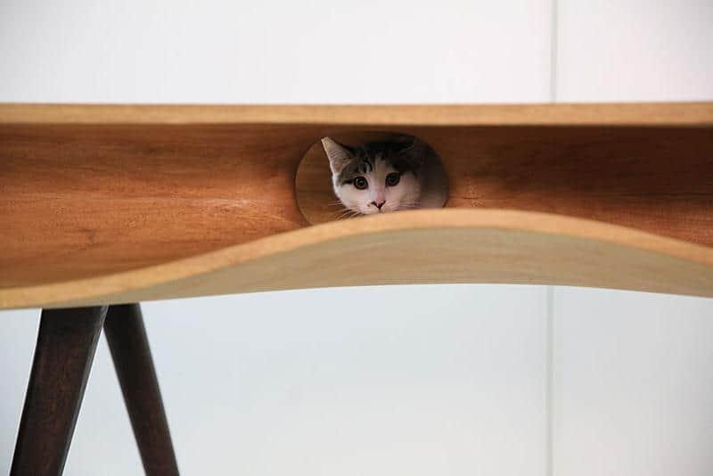mobilia-gato-8