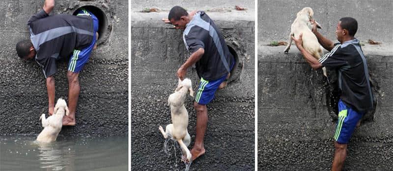 Homem corajoso resgata cachorro de um córrego no Rio de Janeiro 1