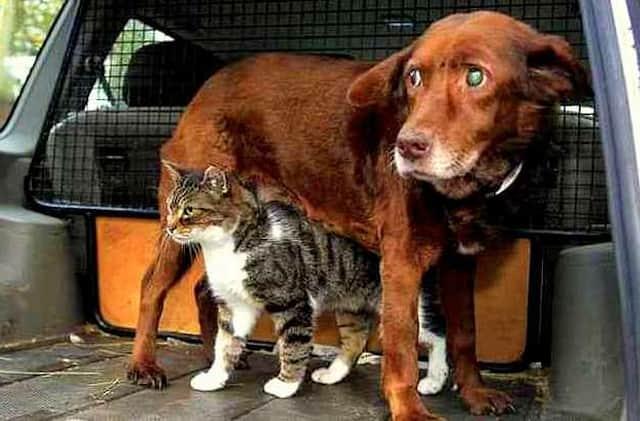 """Felino se transforma em """"gato-guia"""" para cão cego e quase surdo 1"""