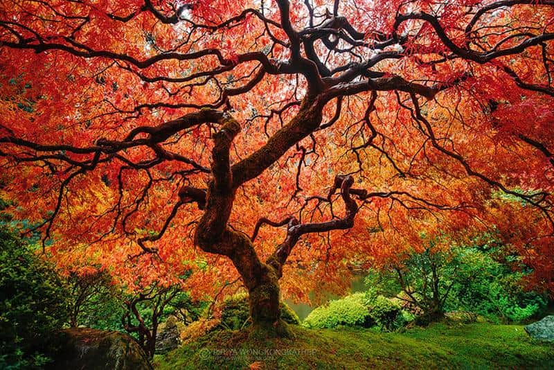 transformacoes-outono-6