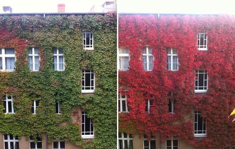 23 fotos antes e depois de belas transformações do outono 4