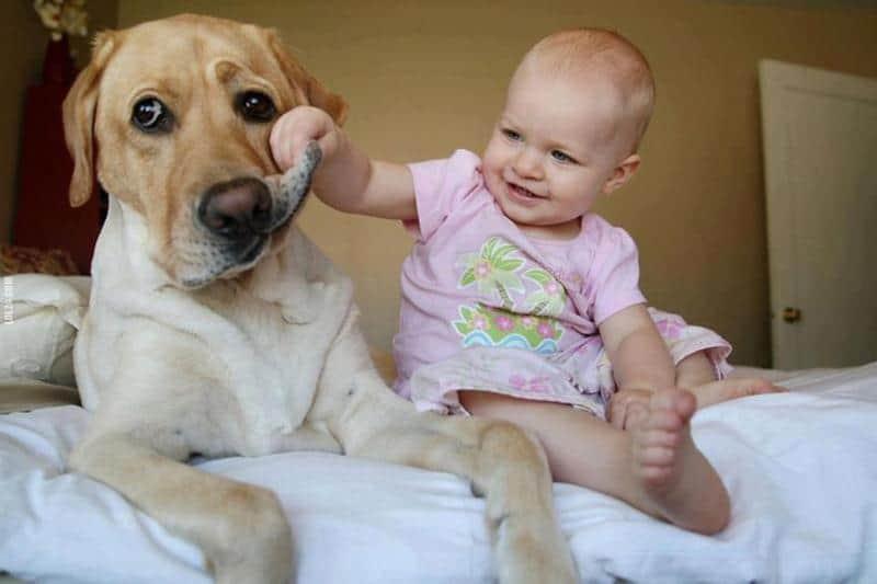 22 fotos de grandes cães cuidando de pequenas crianças 1