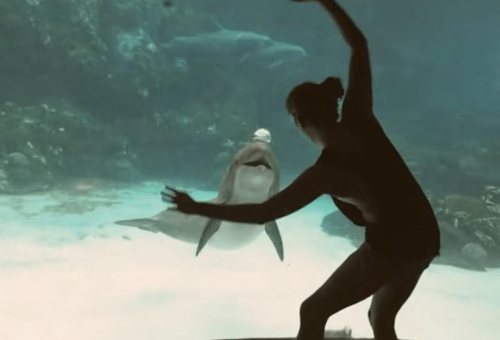 Golfinho dá boas risadas com piruetas de garota 2