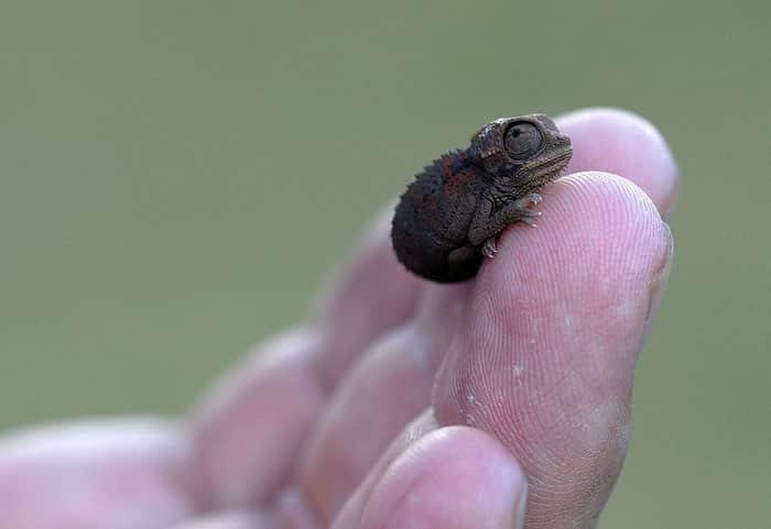 cute-reptiles-1011__700