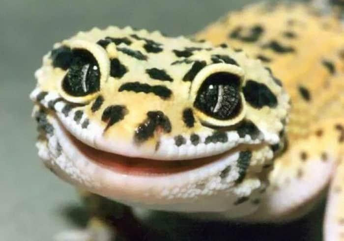 cute-reptiles-104__700