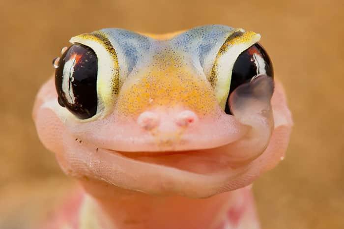 cute-reptiles-107__700