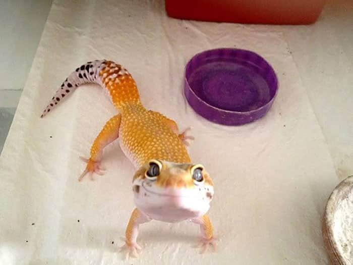 cute-reptiles-109__700