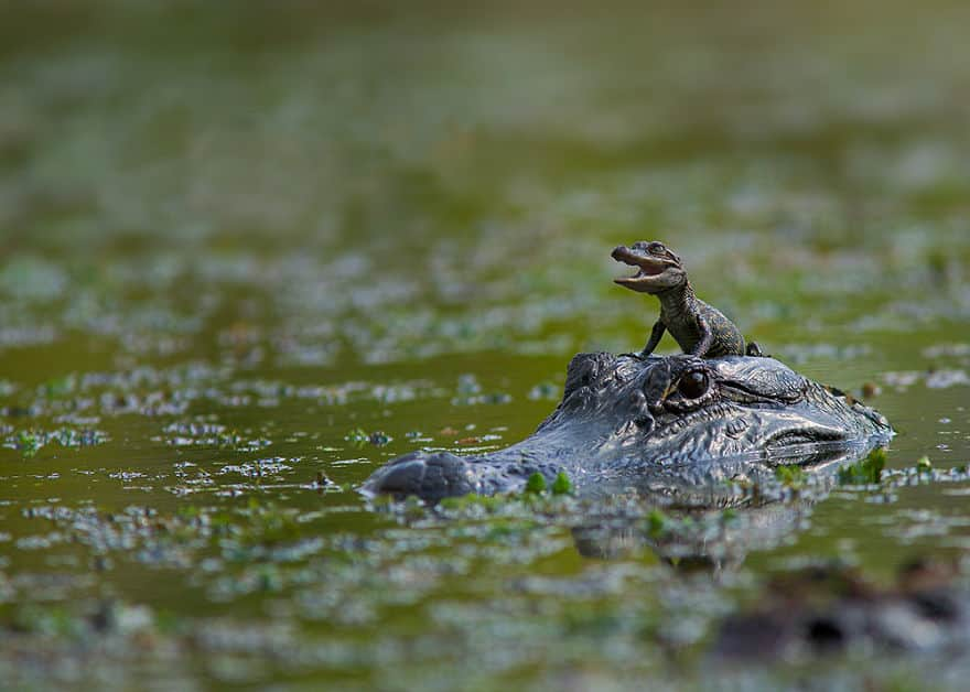 cute-reptiles-111__880