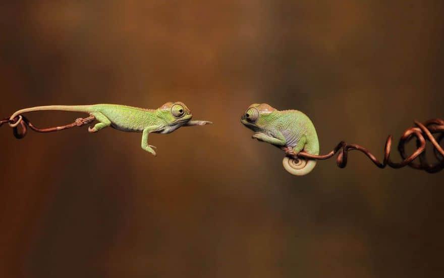 cute-reptiles-16__880