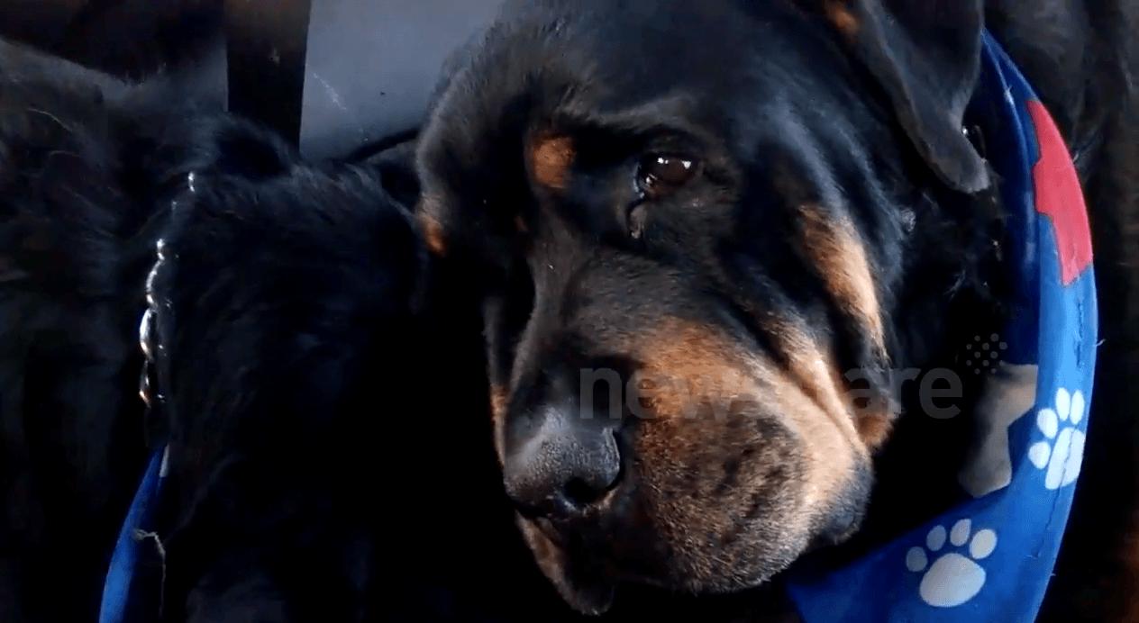 Cão se recusa a se separar do irmão morto, e emociona a internet 2