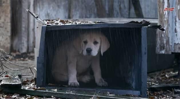 Budweiser nos emociona novamente com comercial de cachorro perdido 4