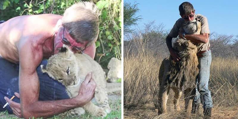 Incríveis imagens que mostram os 11 anos de amizade entre um leão e o homem que salvou sua vida 2