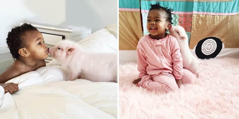 A amizade lindona desse bebê de 2 anos com uma porquinha vão derreter seu coração 1