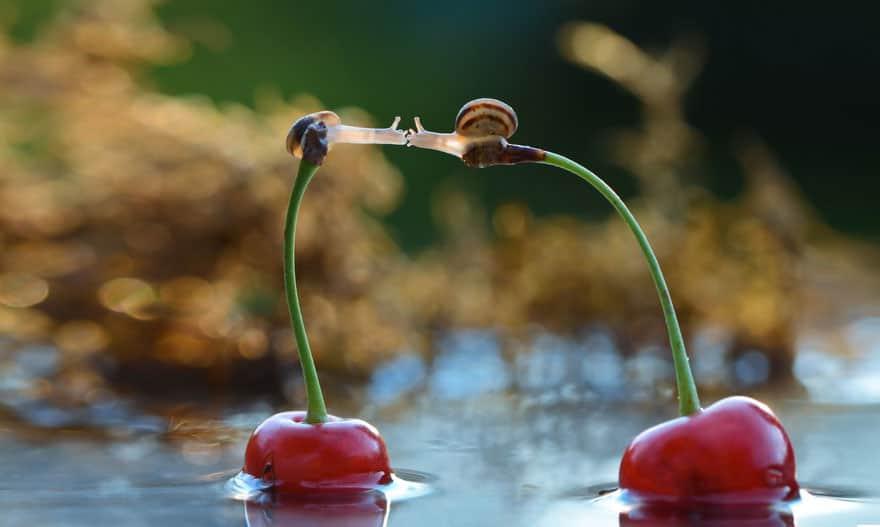 animal-love-friendship-61__880