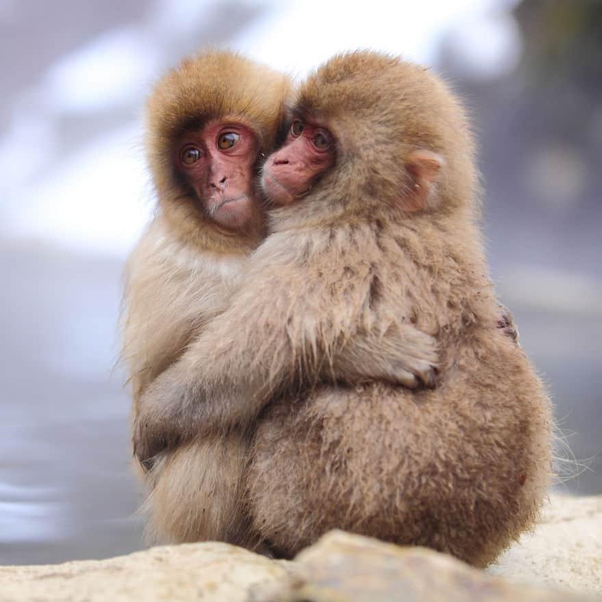 animals-love-couple-2__880