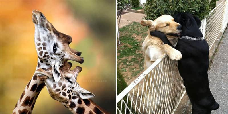 Fotos de casais de animais provam que o amor também existe no reino animal 1
