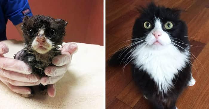 amazing-rescue-cat-transformation-333__700
