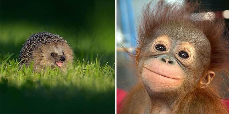 Fizemos uma lista de animais sorrindo que com certeza vai melhorar seu dia