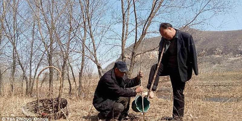 O homem cego junto com seu amigo sem braços já plantaram 10.000 árvores em 10 anos 1